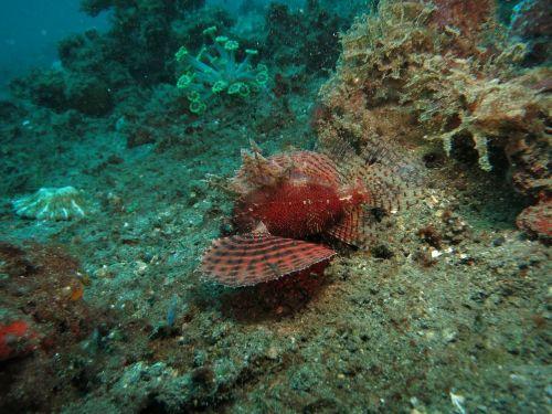 lionfish diving scuba