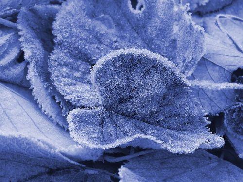 lipovina frozen blue