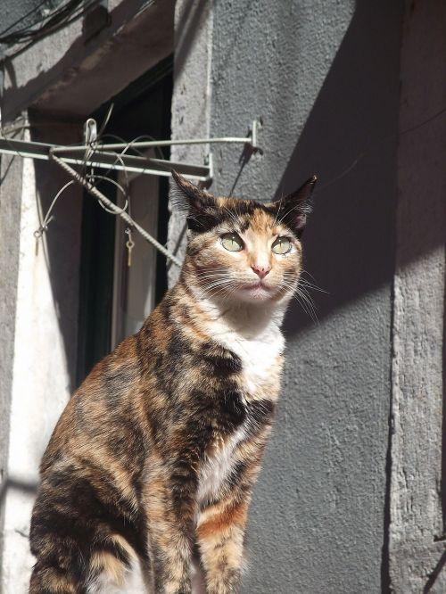lisbon bairro alto cat