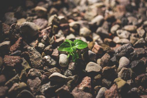 little nature plant