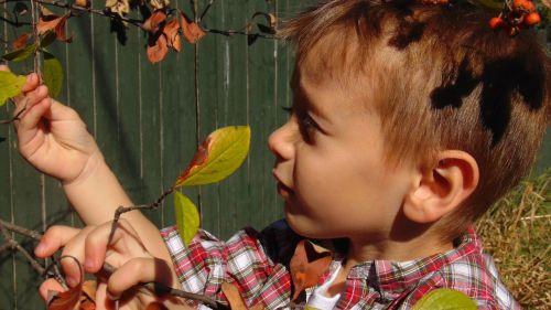 berniukas,vaikas,įdomu,tyrinėti,lauke,gamta,tyrinėti,lauke,mažai,berniukas,mielas,vaikas,vaikystę,jaunas,žavinga,spencer james peters,galinis kiemas