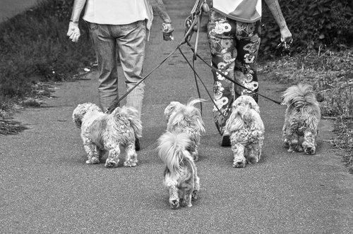 little dogs  doggies  animal