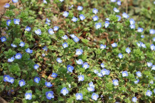 little flower land wild flowers