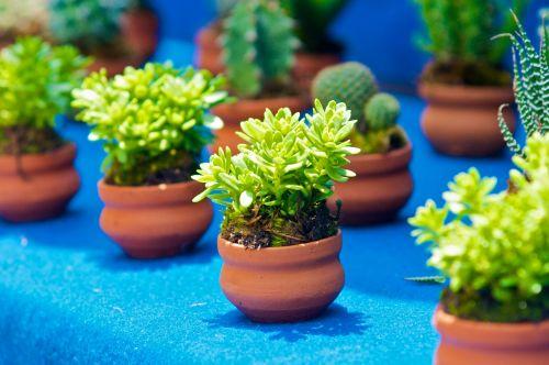 Little Green Plants For Sale