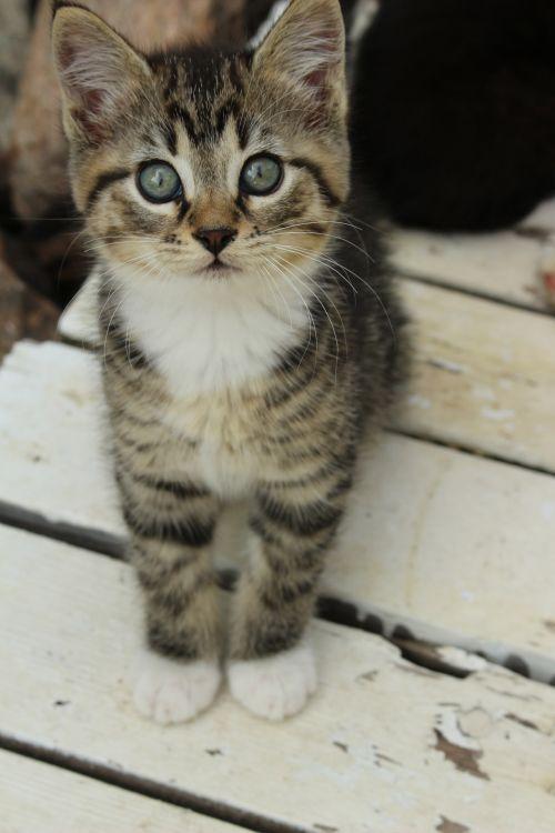 mažai, kačiukas, mielas, mažas kačiukas