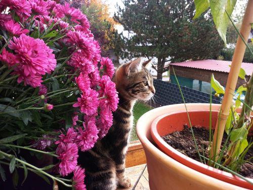 little kitten flowers summer