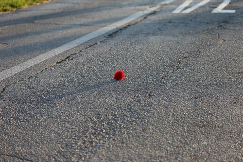 little red rose  rail crossing  road