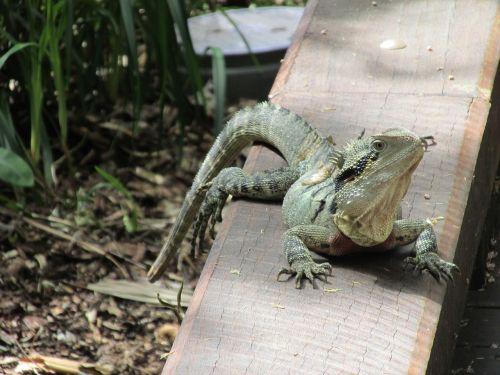 lizard relax forest