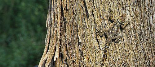 lizard camouflage bark