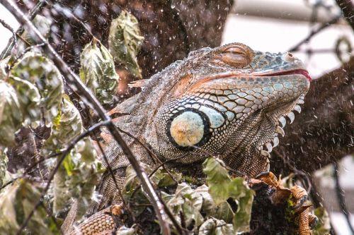 lizard wet shower