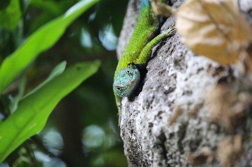 lizard  green  close up
