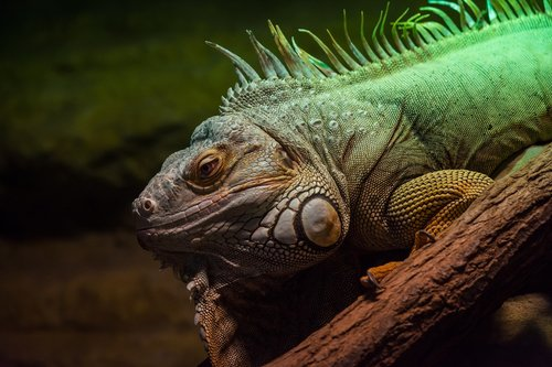 lizard  flakes  green