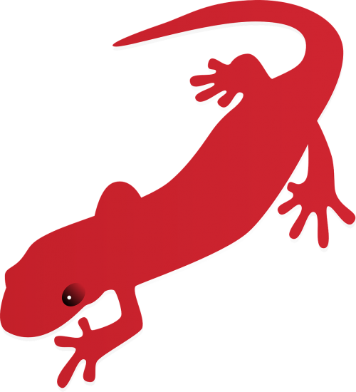 lizard red colorful