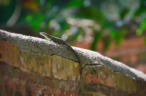 lizard animal wildlife