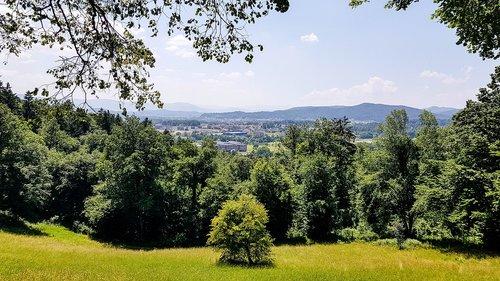 ljubljana  slovenia  forest