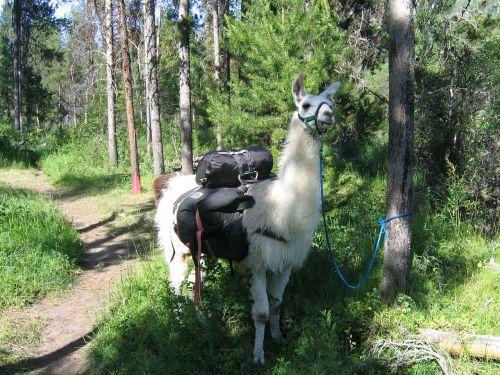llama pack idaho