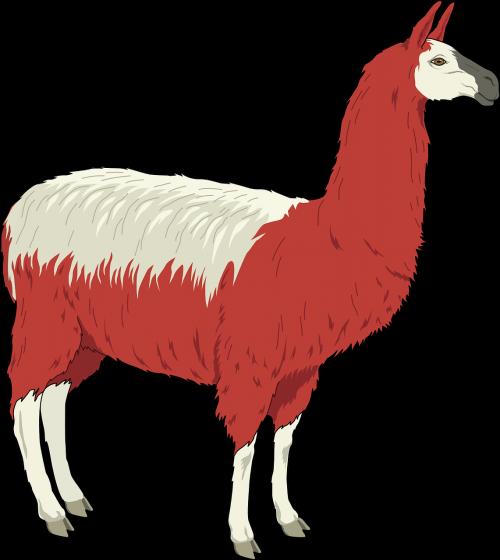 llama shaggy red