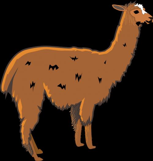 llama shaggy animal