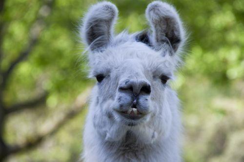 Llama McCloud