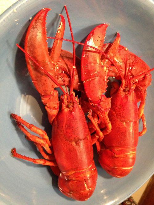 lobster seafood east coast