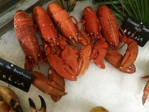 lobster sea animal food