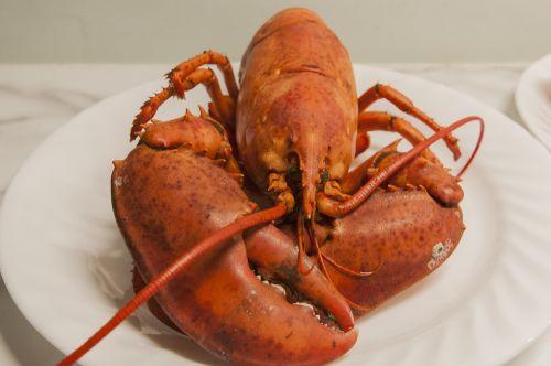 lobster seafood shellfish