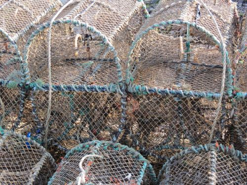 lobster basket trap
