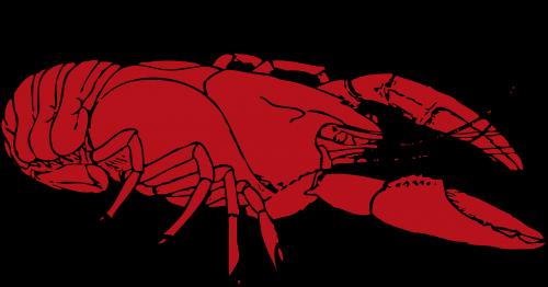 lobster crustaceans red