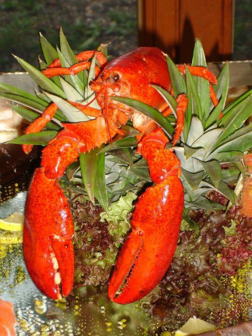 lobster zehnfußkrebs animal