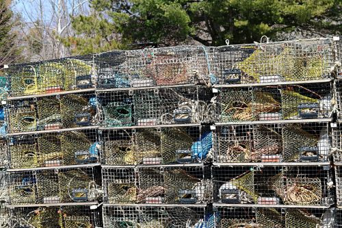 spąstus, spąstai, puodai, omarai & nbsp, puodai, omarai & nbsp, spąstus, žvejyba, lobstering, omaras & nbsp, žvejyba, lobstermen, viela & nbsp, spąstus, narvai, omarai & nbsp, narvuose, omarų spąstai