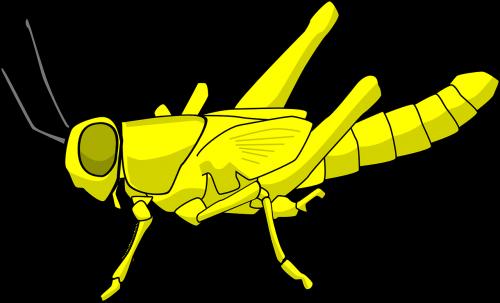 locusts pest insect