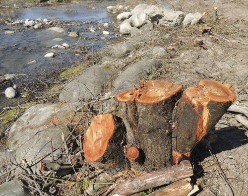 log wood brown