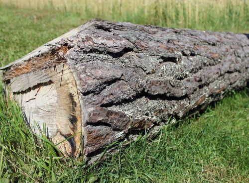 log timber cut