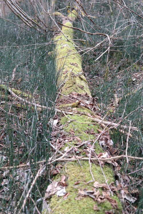 log forest moss
