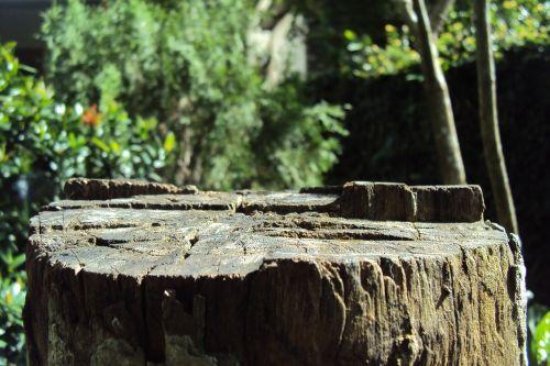log tree cut tree