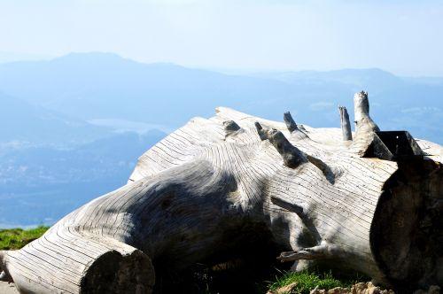 log branch dry