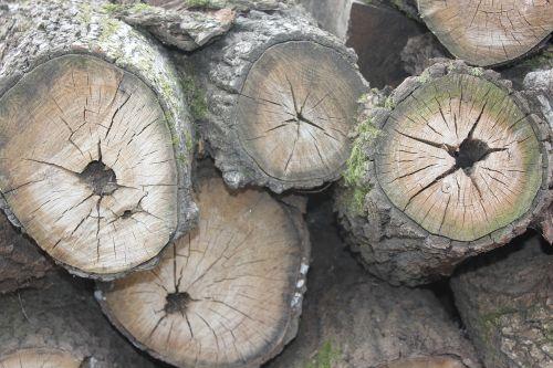 log annual zone firewood