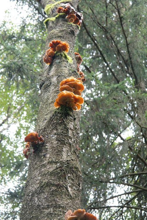 log mushrooms fungal growth