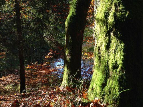 log tree moss