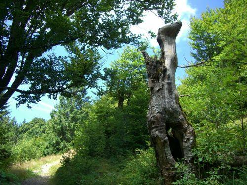 log dead plant arid