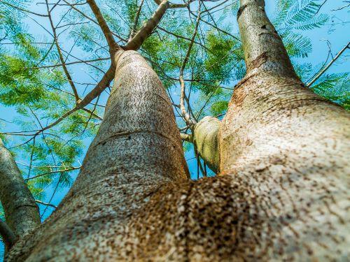 log tree bark