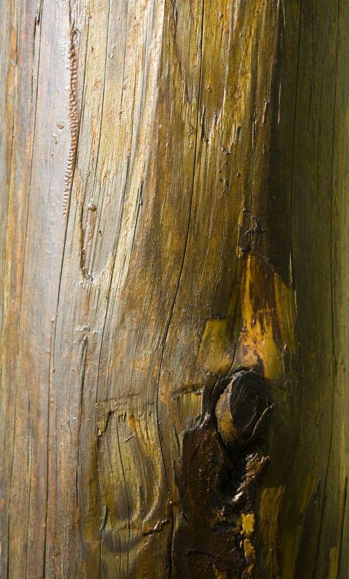 log smooth wood