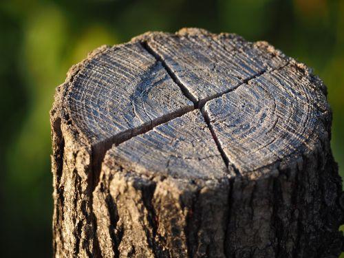 log annual rings tree