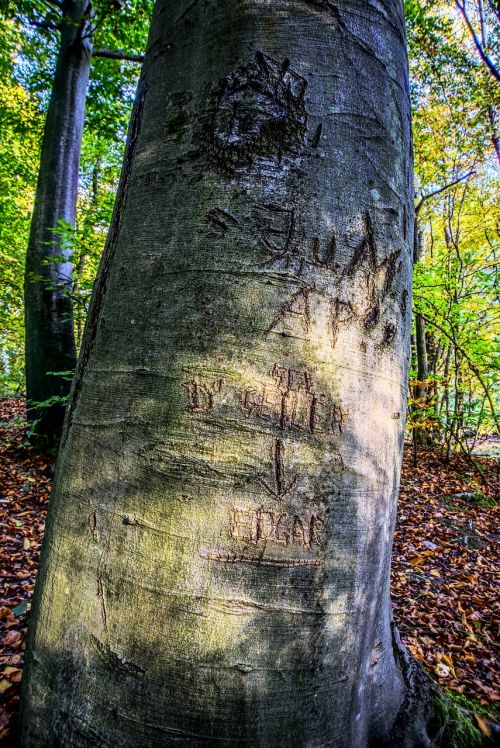 log initials bark
