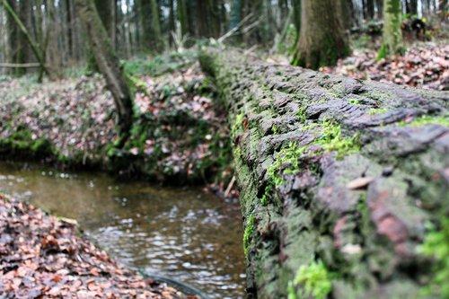 log  bach  moss