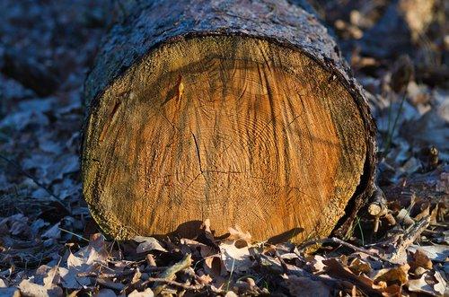 log  annual rings  texture