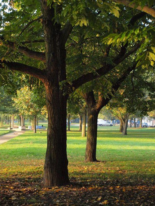 log main park
