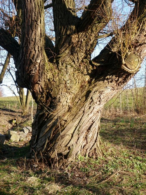 log pasture very old