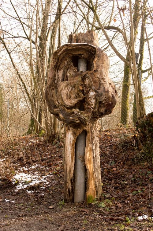 log hollow hollow tree trunk