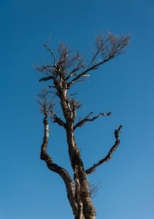 log blue sky winter